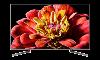 SONY   KD49XG9005BU  